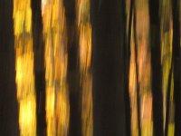 Schattengold 1
