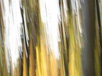 Schattengold 3